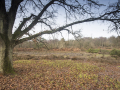 witley common_9725