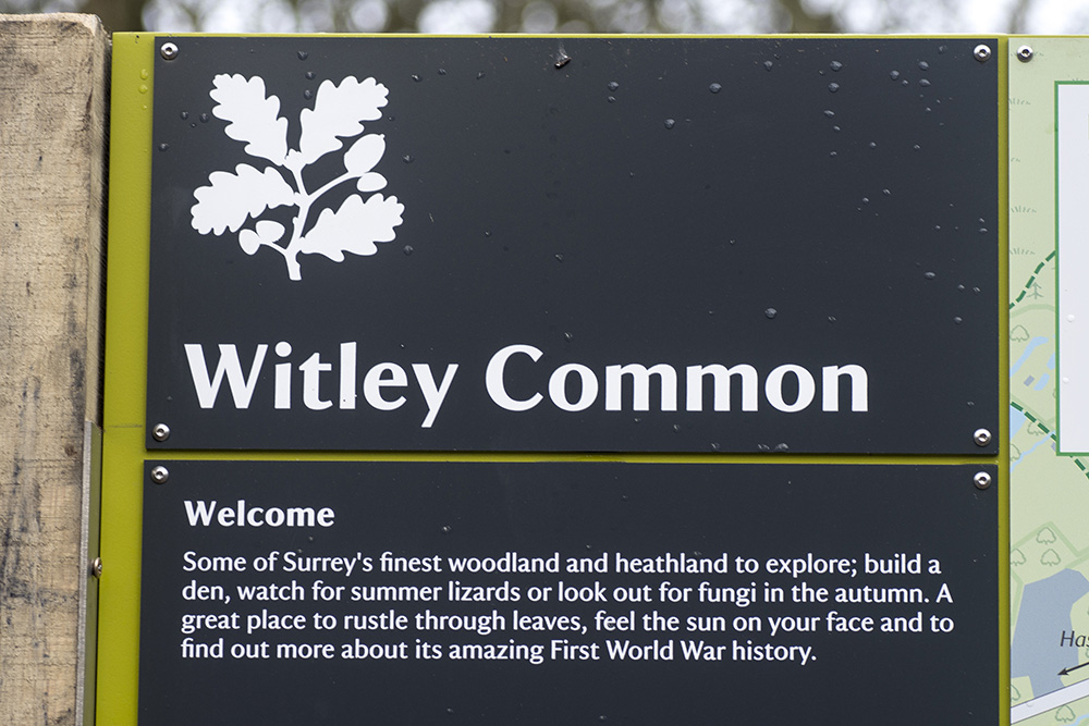witley common_9717